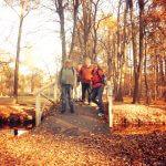 Therapeutisch geführte Herbstwanderung durch den farbenfrohen Herbst