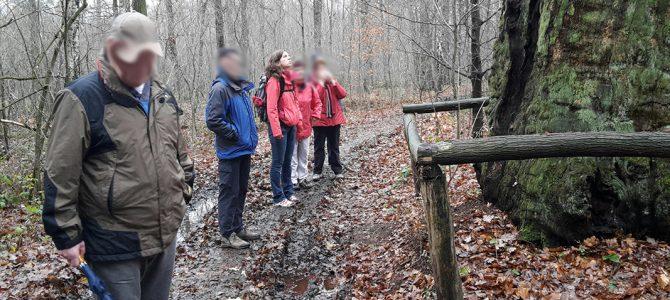 Wandertour zur Rieseneiche in der Dresdner Heide
