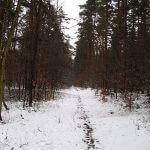 Schneebedeckter Waldweg